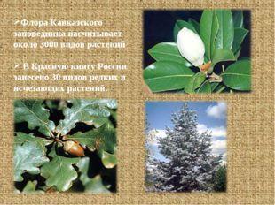Флора Кавказского заповедника насчитывает около 3000 видов растений В Красную