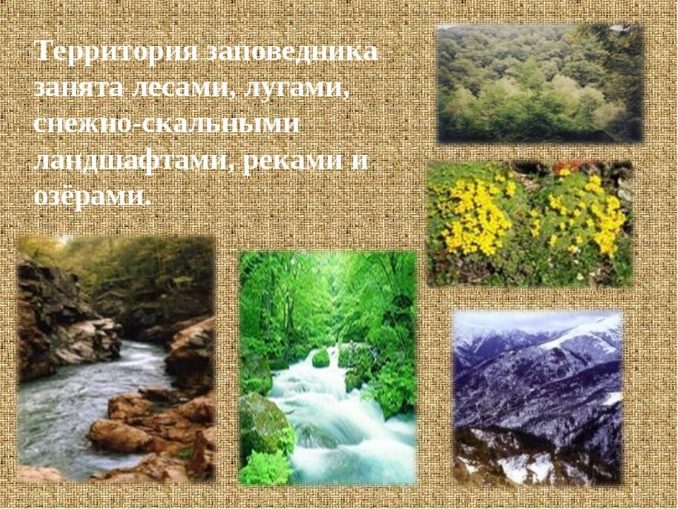 Территория заповедника занята лесами, лугами, снежно-скальными ландшафтами, р...