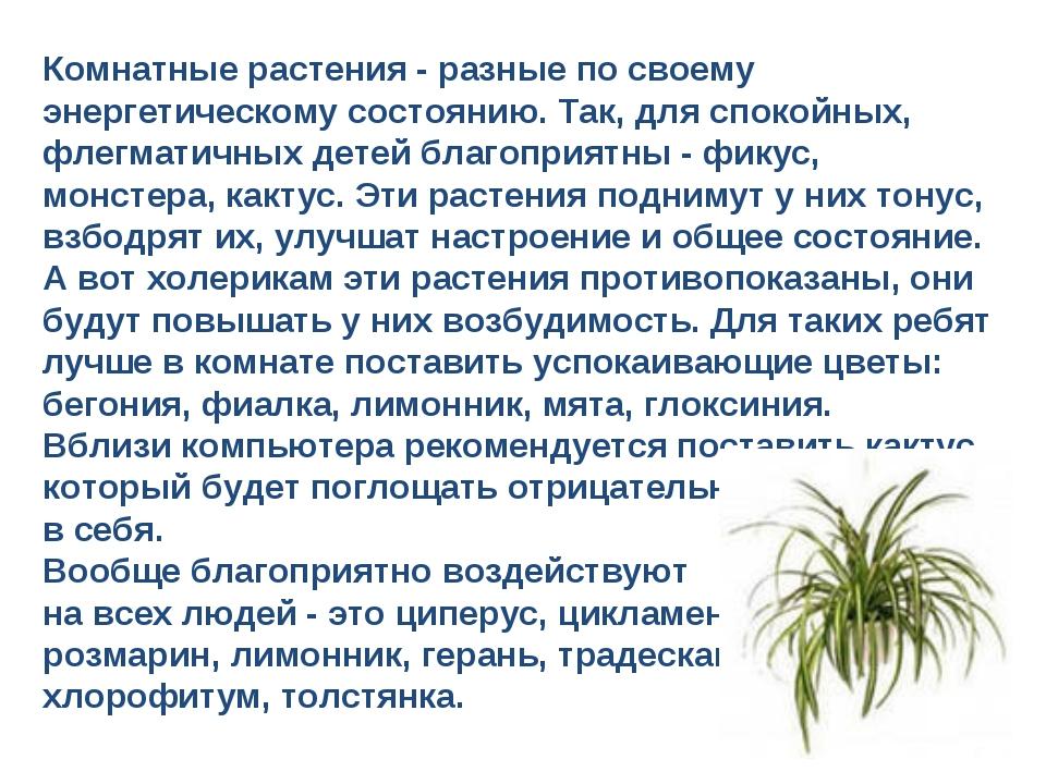 Комнатные растения - разные по своему энергетическому состоянию. Так, для спо...