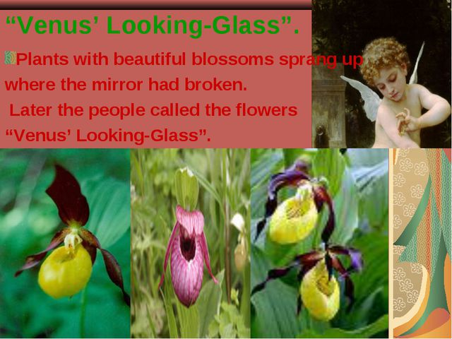 """""""Venus' Looking-Glass"""". Plants with beautiful blossoms sprang up where the mi..."""