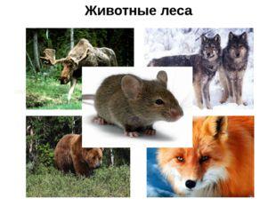 Животные леса олень