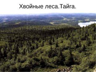 Хвойные леса.Тайга.