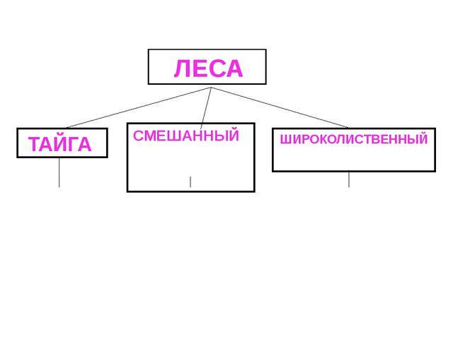 ЛЕСА ТАЙГА СМЕШАННЫЙ ШИРОКОЛИСТВЕННЫЙ