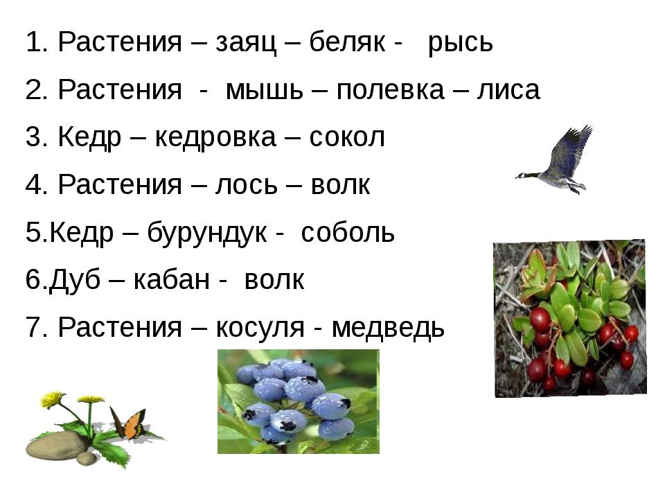 1. Растения – заяц – беляк - рысь 2. Растения - мышь – полевка – лиса 3. Кед...