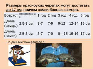 Размеры красноухих черепах могут достигать до 17 см, причем самки больше самц