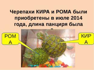 Черепахи КИРА и РОМА были приобретены в июле 2014 года, длина панциря была ок