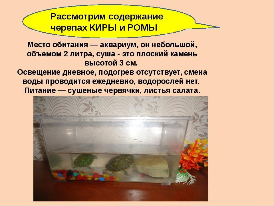 Место обитания — аквариум, он небольшой, объемом 2 литра, суша - это плоский...