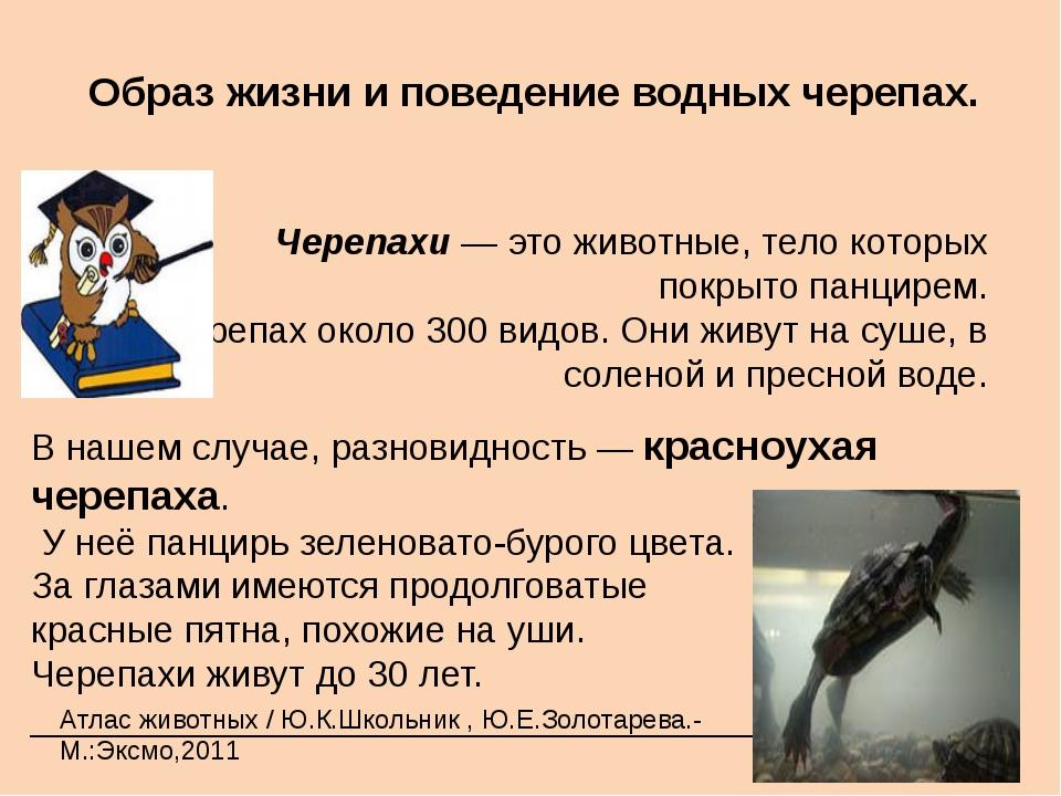Образ жизни и поведение водных черепах. Черепахи — это животные, тело котор...