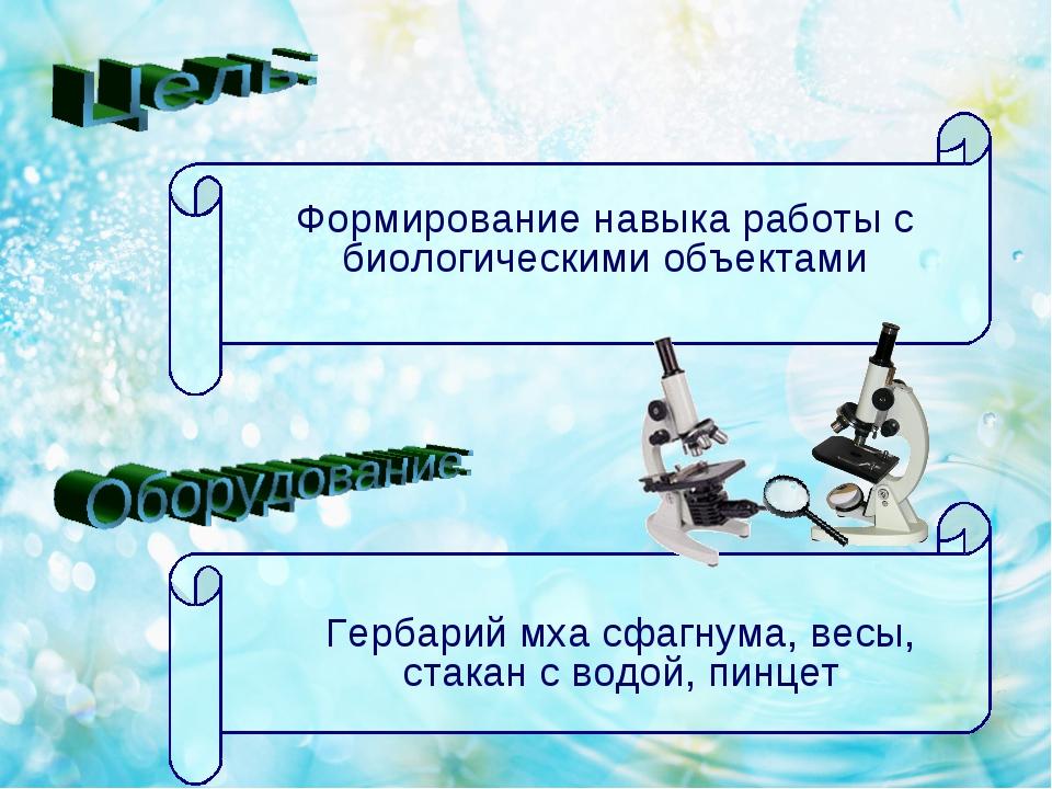 Формирование навыка работы с биологическими объектами Гербарий мха сфагнума,...