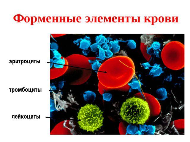 Форменные элементы крови эритроциты лейкоциты тромбоциты