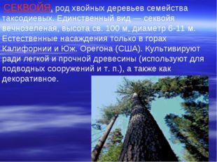СЕКВОЙЯ, род хвойных деревьев семейства таксодиевых. Единственный вид — секв