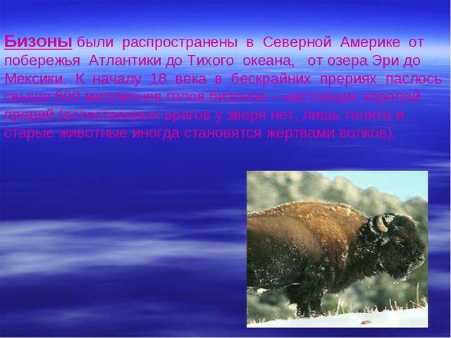 Бизоны были распространены в Северной Америке от побережья Атлантики до Тихо...