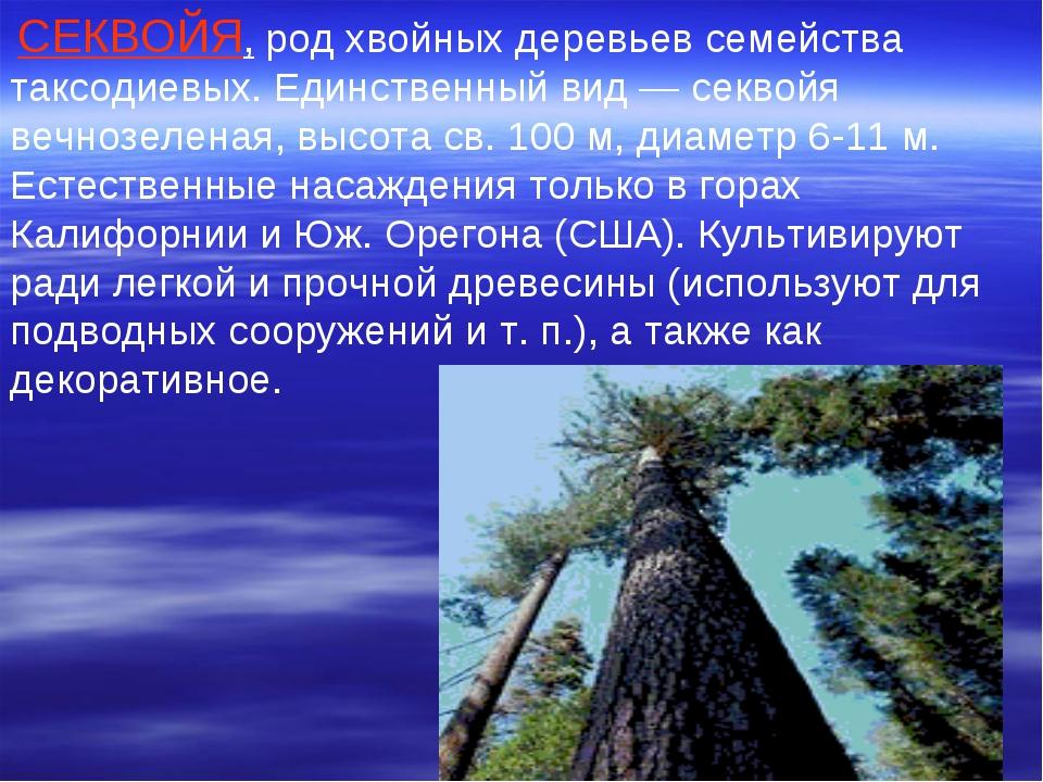 СЕКВОЙЯ, род хвойных деревьев семейства таксодиевых. Единственный вид — секв...