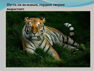 Пусть он вольным, гордым тигром вырастает.