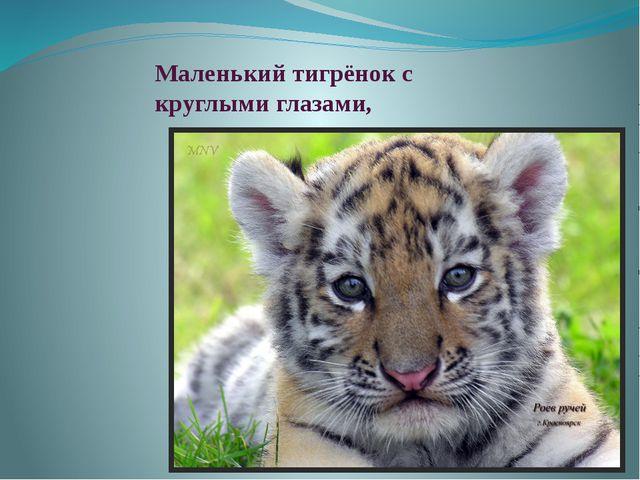 Маленький тигрёнок с круглыми глазами,
