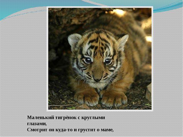 Маленький тигрёнок с круглыми глазами, Смотрит он куда-то и грустит о маме,