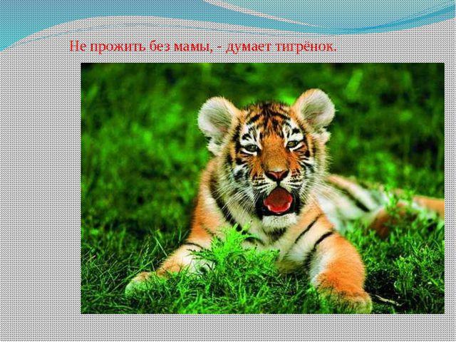 Не прожить без мамы, - думает тигрёнок.