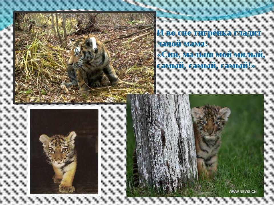 И во сне тигрёнка гладит лапой мама: «Спи, малыш мой милый, самый, самый, сам...