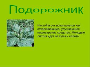 Настой и сок используется как отхаркивающее, улучшающее пищеварение средство.