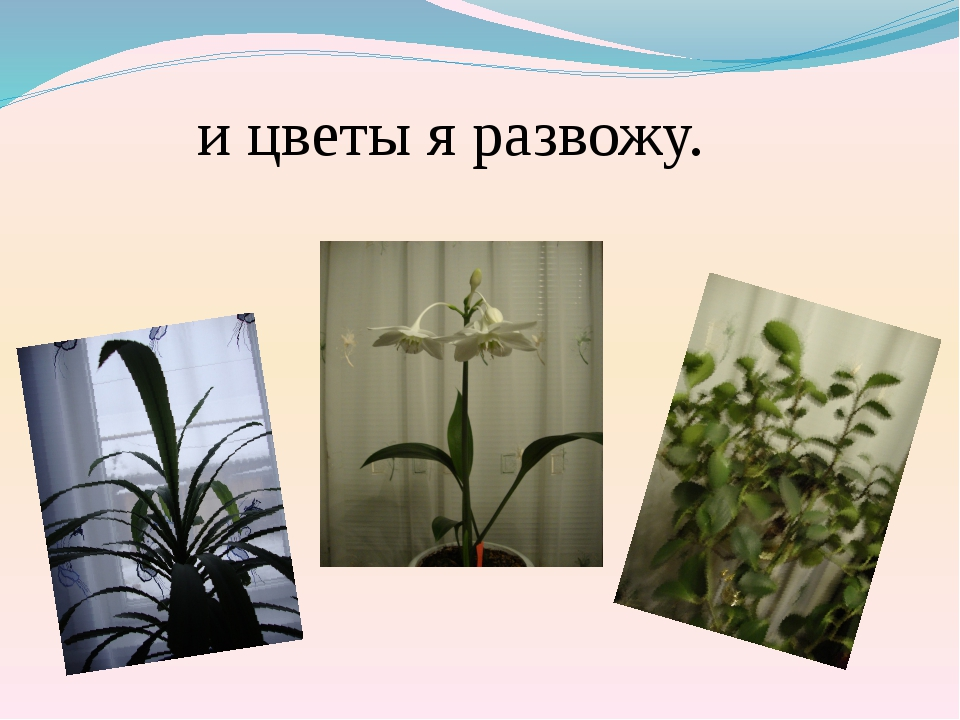 и цветы я развожу.