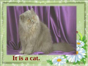 What animal is it? It is a cat.