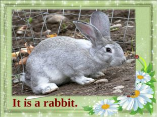 What animal is it? It is a rabbit.