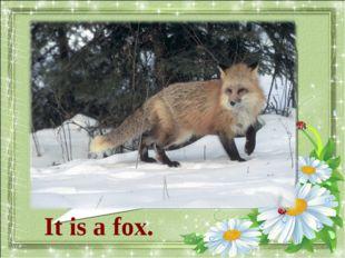 What animal is it? It is a fox.