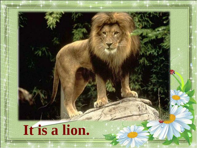 What animal is it? It is a lion.