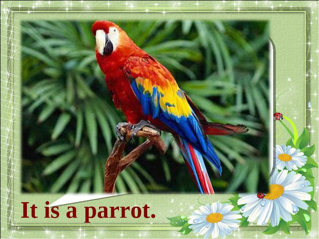 What animal is it? It is a parrot.