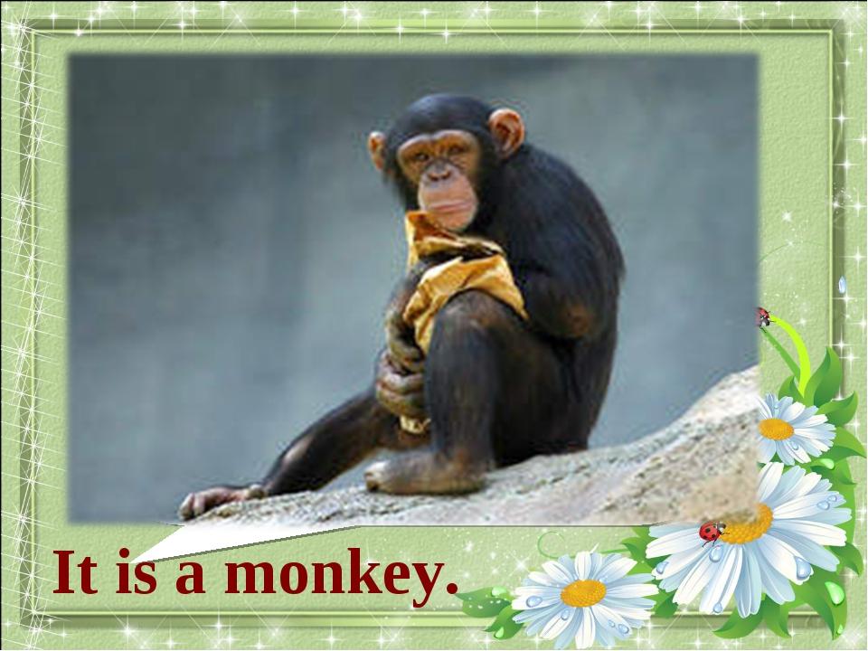 What animal is it? It is a monkey.