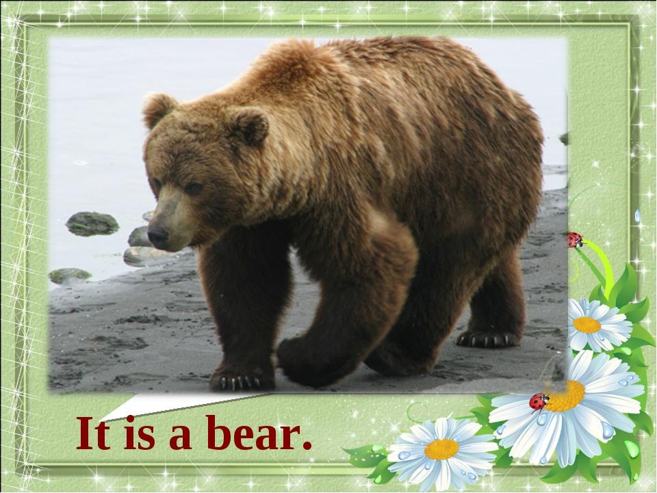 What animal is it? It is a bear.