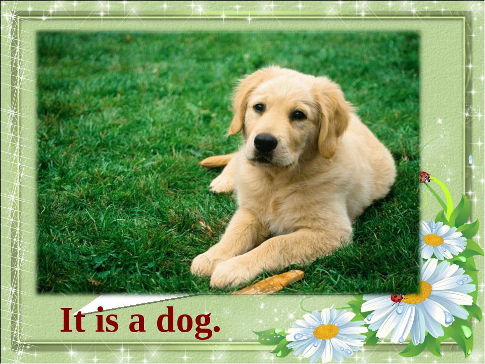 What animal is it? It is a dog.