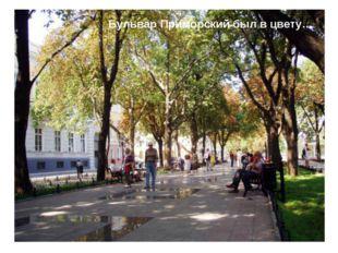 Бульвар Приморский был в цвету…