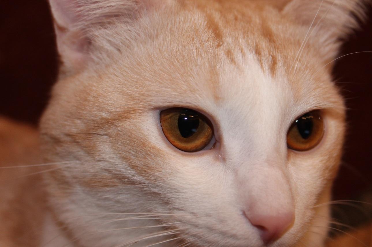 C:\Users\Admin\Desktop\Наш кот\IMG_1632.JPG