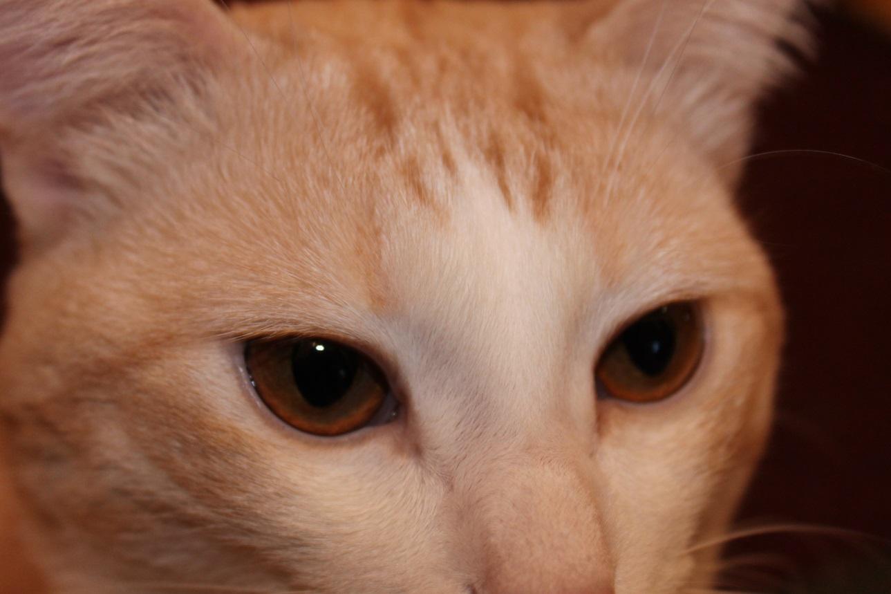 C:\Users\Admin\Desktop\Наш кот\IMG_1633.JPG