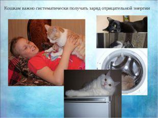 Кошкам важно систематически получать заряд отрицательной энергии