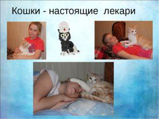 Кошки - настоящие лекари