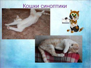 Кошки синоптики