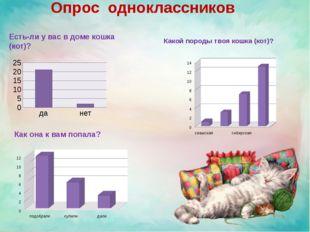 Опрос одноклассников Есть-ли у вас в доме кошка (кот)? Какой породы твоя кош