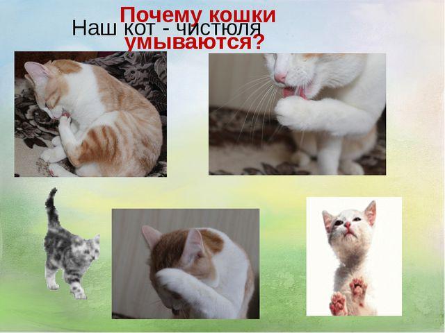Почему кошки умываются? Наш кот - чистюля
