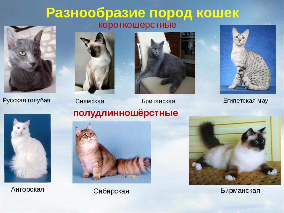 Разнообразие пород кошек Сиамская Британская Египетская мау короткошерстные Р...