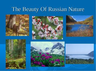 The Beauty Of Russian Nature