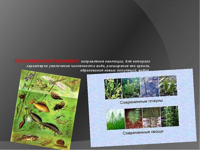 Биологический прогресс-направление эволюции, для которого характерно увеличе...