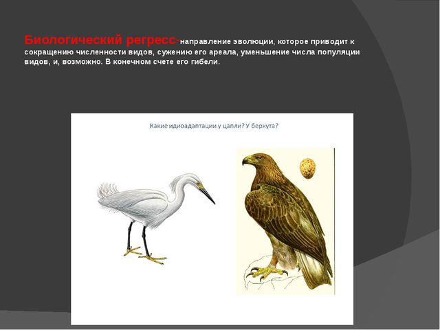 Биологический регресс-направление эволюции, которое приводит к сокращению чи...