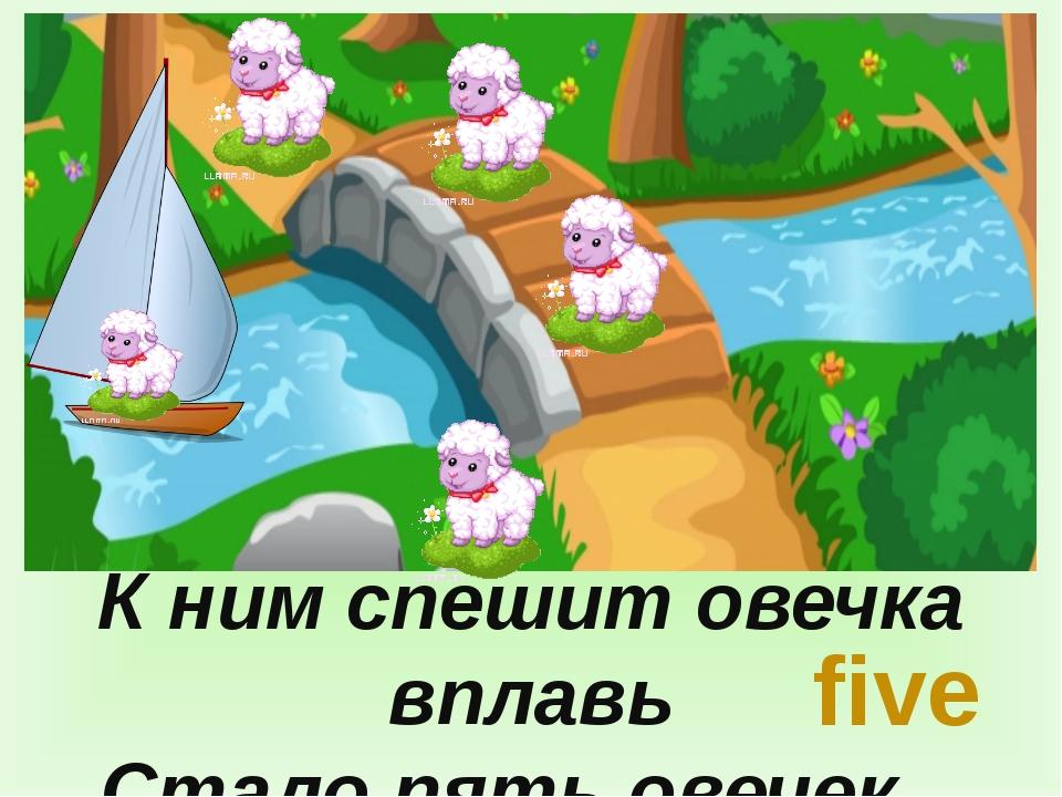 К ним спешит овечка вплавь Стало пять овечек, five