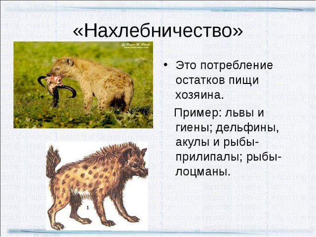 «Нахлебничество» Это потребление остатков пищи хозяина. Пример: львы и гиены;...