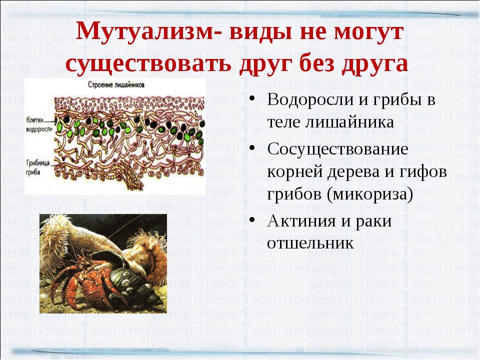 Мутуализм- виды не могут существовать друг без друга Водоросли и грибы в теле...