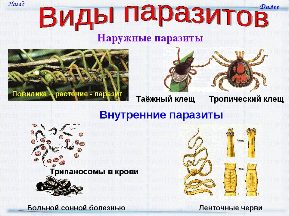 Наружные паразиты Повилика – растение - паразит Таёжный клещ Тропический клещ...