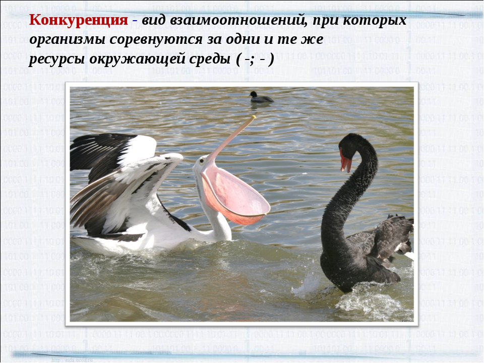 Конкуренция - вид взаимоотношений, при которых организмы соревнуются за одни...