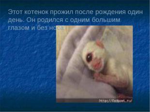 Этот котенок прожил после рождения один день. Он родился с одним большим глаз